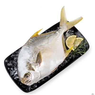 2条免运 蟹状元 新鲜金鲳鱼鲜活金昌鱼海鲜冷冻鲜活450-600g/条