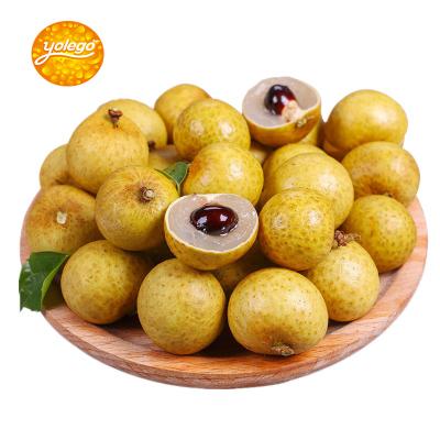 (兩件發3斤三件發5斤)悠樂果 泰國龍眼1.5斤 桂圓新鮮水果 冷藏漿果類/核果類