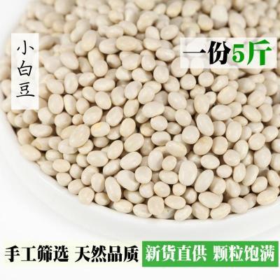 云南特產特級小白豆5斤云豆白蕓豆扁豆子菜豆類豆子農家自產