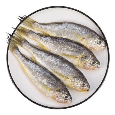 【6斤裝小黃魚僅需35.9元】順豐直達 野生小黃魚含冰 深海水產鮮活海鮮水產活魚生鮮(凈重3.5-4斤)