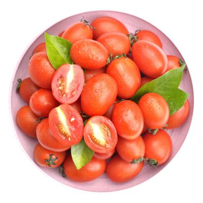 广西圣女果5斤装 小西红柿 新鲜水果孕妇水果 小番茄 蔬菜水果