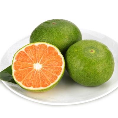 【買二領劵減15元】桔緣 新鮮桔子蜜桔薄皮青皮5斤橘子孕婦水果批發多汁現摘現發