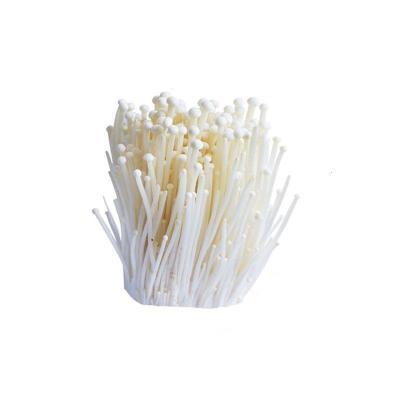 【有檢疫證】金針菇150g/包新鮮菌菇新鮮火鍋菜