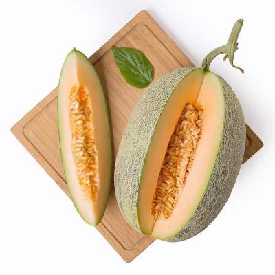 【拍2份9折】現摘新疆哈密瓜20斤新鮮水果批發網紋瓜甜蜜瓜一箱西州蜜