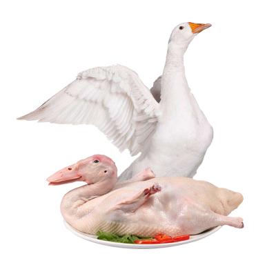 農家散養新鮮大鵝整只6斤土鵝肉老鵝大白鵝冷凍生鮮