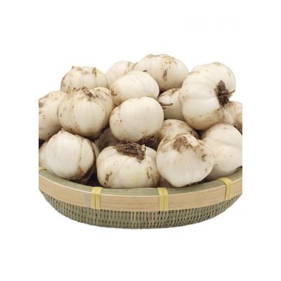博多客甘肃兰州特产新鲜百合生鲜蔬菜甜百合非百合干20头1kg生鲜新鲜
