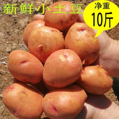叶小米新鲜小土豆红皮心土豆农家自种蔬菜云南小土豆马铃薯小洋芋10斤