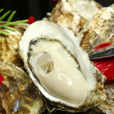 山東海陽生蠔鮮活新鮮牡蠣即食海蠣子海鮮水產鮮活一箱帶殼5斤
