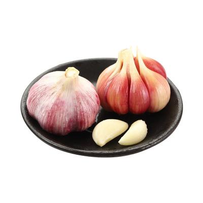 紫皮大蒜1斤裝 多瓣 濕蒜