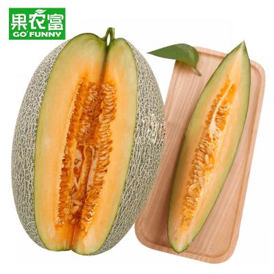 果農富【2件起售】西州蜜哈密瓜 2.2-2.5斤 2件共發1-2個瓜 網紋瓜香瓜甜瓜蜜瓜新鮮水果新疆哈密瓜