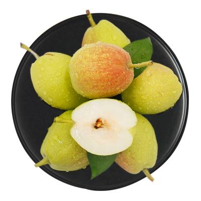 果贵缘 库尔勒香梨母梨8斤精品单果100-120g 时令水果