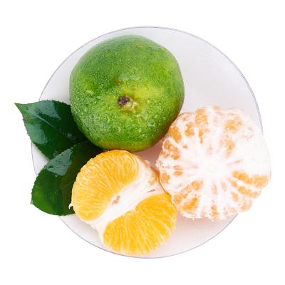 【第二件半價 兩件合發5斤】宜昌蜜桔 新鮮橘子水果蜜桔當季無籽青皮蜜桔整箱