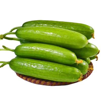 【4件起售】薯香記 水果黃瓜1斤裝(拍4斤發5斤)(4的倍數發貨)山東特產蔬菜沙拉菜 新鮮現摘現發