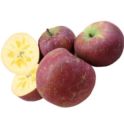 葉小米現摘云南大理農家冰糖心蘋果5斤孕婦甜脆新鮮水果昭通丑蘋果富士【買2份減20元】
