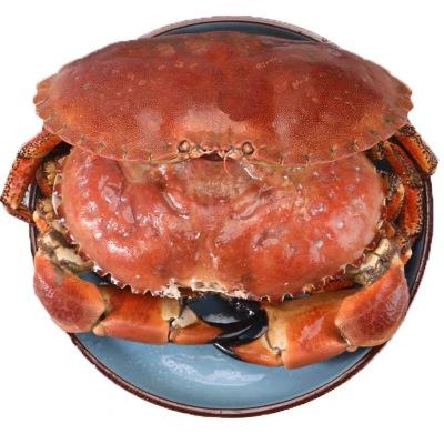 【進口面包蟹僅需58元】600-800g/只 愛爾蘭進口蟹 新鮮海鮮水產 發財蟹黃金蟹黃道蟹大螃蟹生鮮