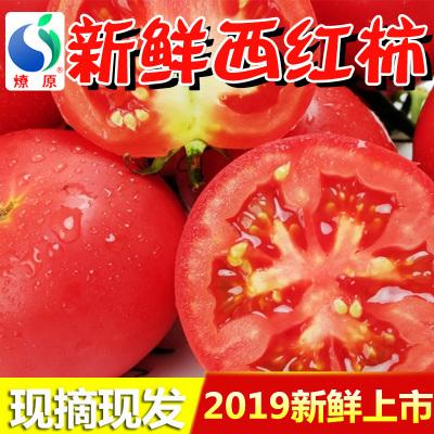 燎原 西红柿 4斤装 2kg 新鲜粉西红柿子 有机绿色蔬菜水果大番茄生吃