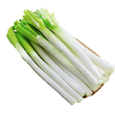 山東特產新鮮大蔥2.5斤裝 香蔥 鐵桿蔥 煎餅卷大蔥 甜蔥 新鮮蔬菜