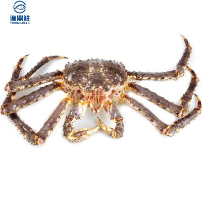 【活鮮】 鮮活阿拉斯加帝王蟹3.8-4斤/只 鮮活發貨 送吃蟹工具