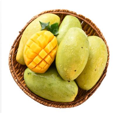 【越南进口】玉芒果青芒5斤装 单果200g以上 当季新鲜热带水果青芒果 非台农凯特芒