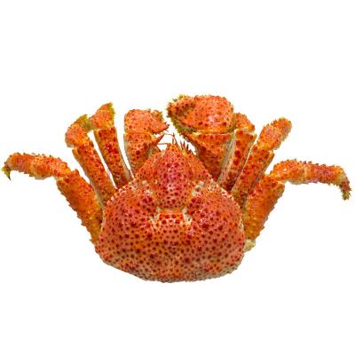 漁鼎鮮智利雪蟹600g-800g 整只大鱈蟹熟凍鱈蟹 媲美帝王蟹皇后蟹