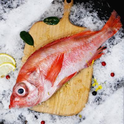 鮮有匯聚 新鮮紅鯛魚600g-400g 挪威進口大眼鯛魚
