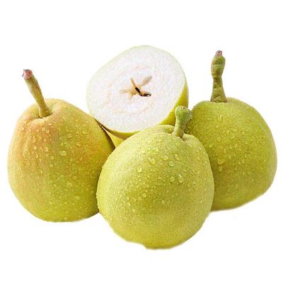 佳艾果缘 库尔勒香梨5斤 箱装 单果80-90g新疆水晶甜梨雪酥梨子新鲜水果西北