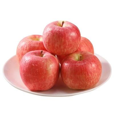 【兩件減5元 合發一箱毛重10斤】棲霞紅富士新鮮蘋果水果孕婦吃的丑萍平批發整箱山東【5斤約12個】