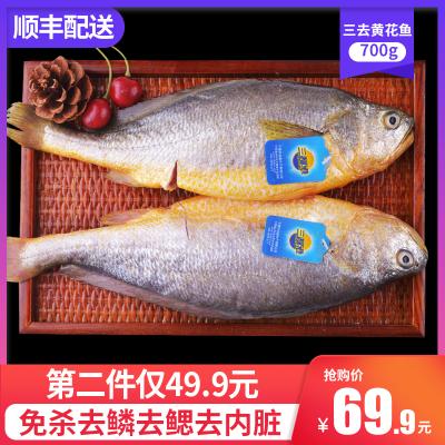 三都港三去无公害大黄鱼 黄花鱼黄鱼新鲜生鲜海鱼冷冻去内脏1.4斤