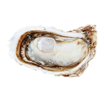 海洋岛HAIYANGDAO 生蚝鲜活大连特色海鲜2500g L号 鲜活牡蛎 海蛎子 盒装 海鲜水产