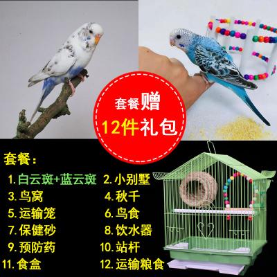 寵弗 【包下蛋】虎皮活鳥幼鳥送鳥籠鳥類活寵物鳥手養小鳥