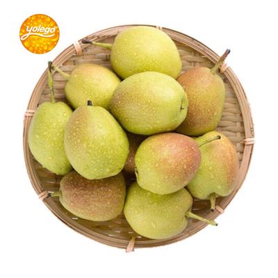 悠乐果 新疆库尔勒香梨2.5kg 新鲜水果