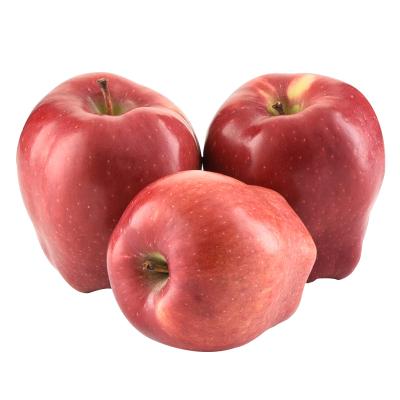 【2件免郵】甘肅花牛蘋果 粉面蘋果 75#-80#左右2.5斤 偶數件發貨粉面香甜 西沛水果