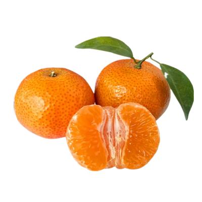 广西砂糖橘5斤装 新鲜水果橘子 象州砂糖桔子