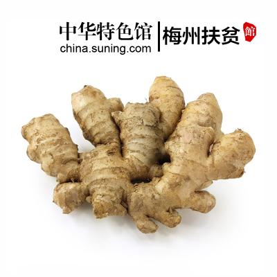 【中华特色】梅州扶贫馆 黄姜 生姜 农家鲜姜 月子姜 老姜 新鲜蔬菜调味品 250g 半斤装 华南