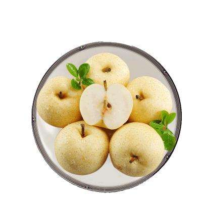 【苗家十八洞】 安徽碭山酥梨4.5斤裝 國產時令水果 肉質飽滿 偶數發貨
