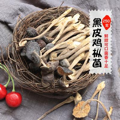 雞縱菌黑皮雞樅菌云南特產新鮮雞棕菌蘑菇250g