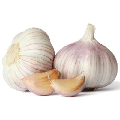 新鮮干大蒜頭2.5斤裝 新蒜農家蔬菜低價批發紫皮大蒜金鄉干蒜頭