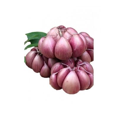 博多客 云南紫皮大蒜红蒜干蒜红皮大蒜种子土蒜