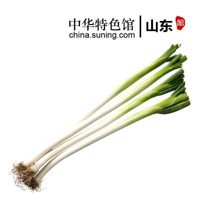 【中华特色馆】山东馆 章丘大葱2.5斤 山东特产新鲜蔬菜1250g 长葱甜葱【双数发货】