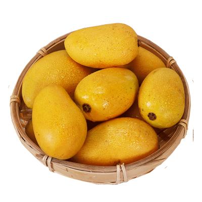 苗家十八洞 海南小臺農芒果2.5斤裝 單果重60-100g 時令生鮮水果爽滑產地直發 偶數發貨