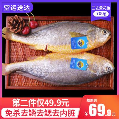 三都港三去無公害大黃魚 黃花魚黃魚新鮮生鮮海魚冷凍去內臟1.4斤