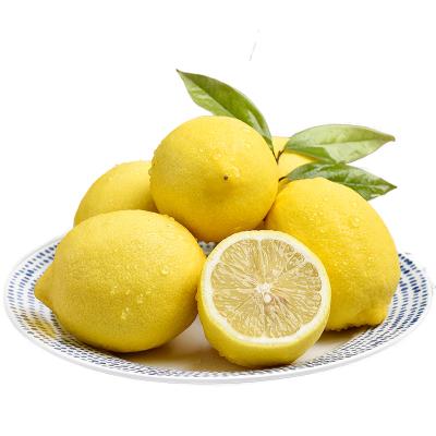 【熊貓鳥】重慶黃檸檬 新鮮水果 產地直發 凈重1斤裝(5單合發1件凈重5斤裝 5的倍數件發貨)單果80g以上